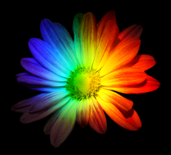 rainbow flower by sagethollen on deviantart