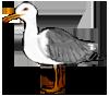 Gull by THANK-U-plz