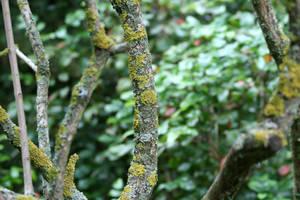 fungi banches