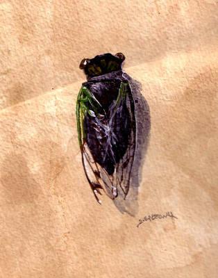 Cicada by Shadsie