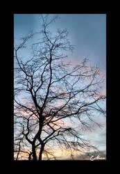 Tree at Dusk by iguanameenie