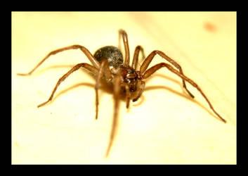 Spider 1 by iguanameenie
