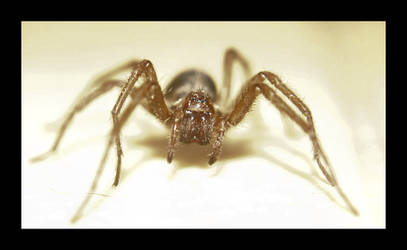 Spider 2 by iguanameenie