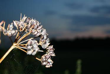 Spiders Web in Field by iguanameenie