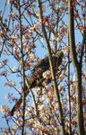 Springtime in Africa