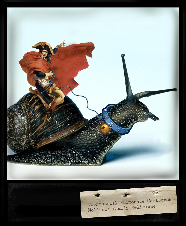 Snailrider by hogret