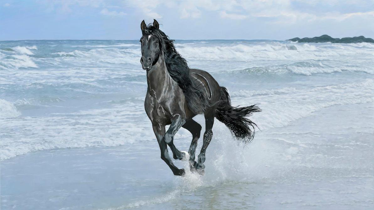 horse running beach by ConfirmedBurger on DeviantArt - photo#17