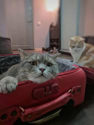 Baggage Inspection by NataliGagarina