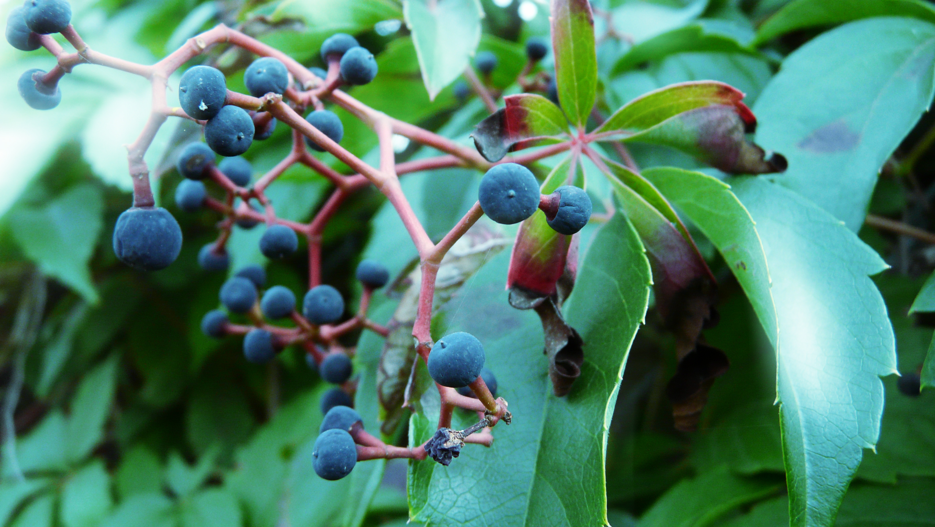 10 Lethal Plants That Are In Your Backyard Right Now