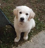 Puppy Eyes by Inker-Golden