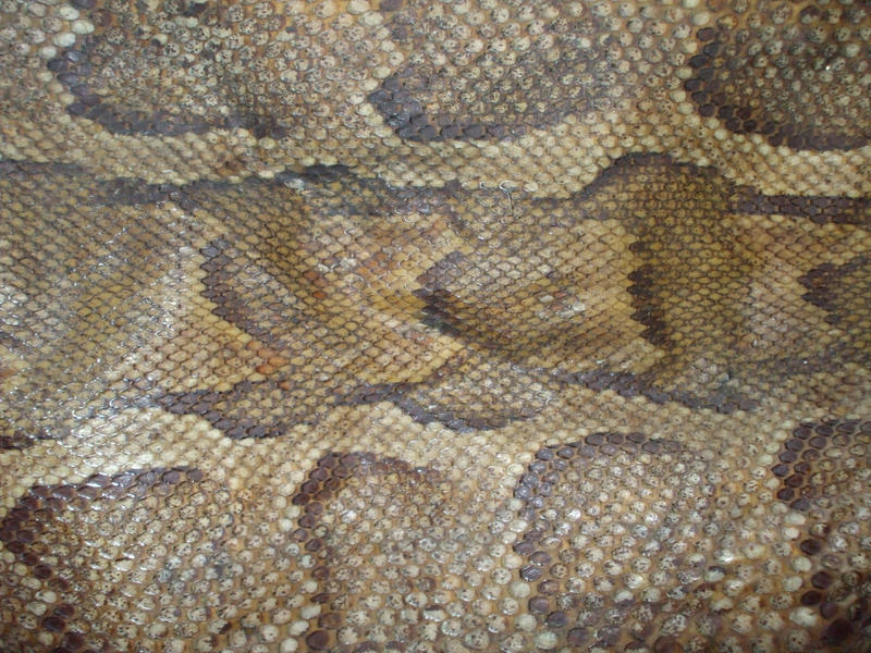 snake skin by KTVL-resources