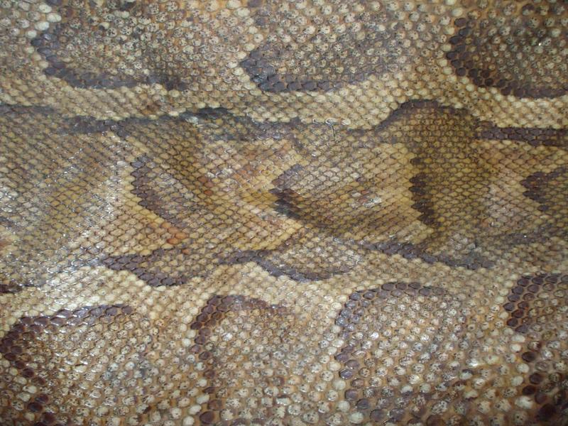 snake skin by KTVL-resources