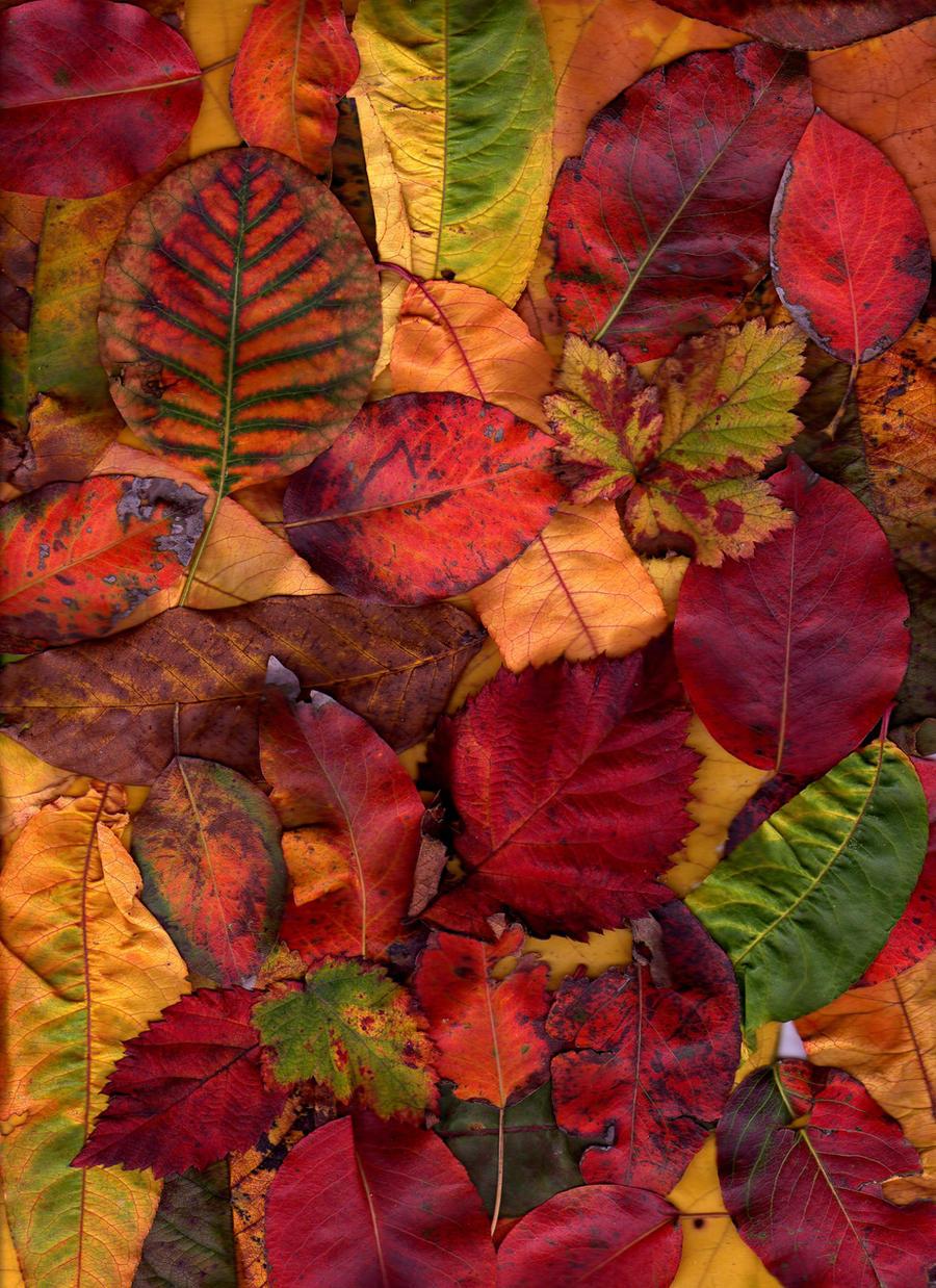 autumn texture by KTVL-resources