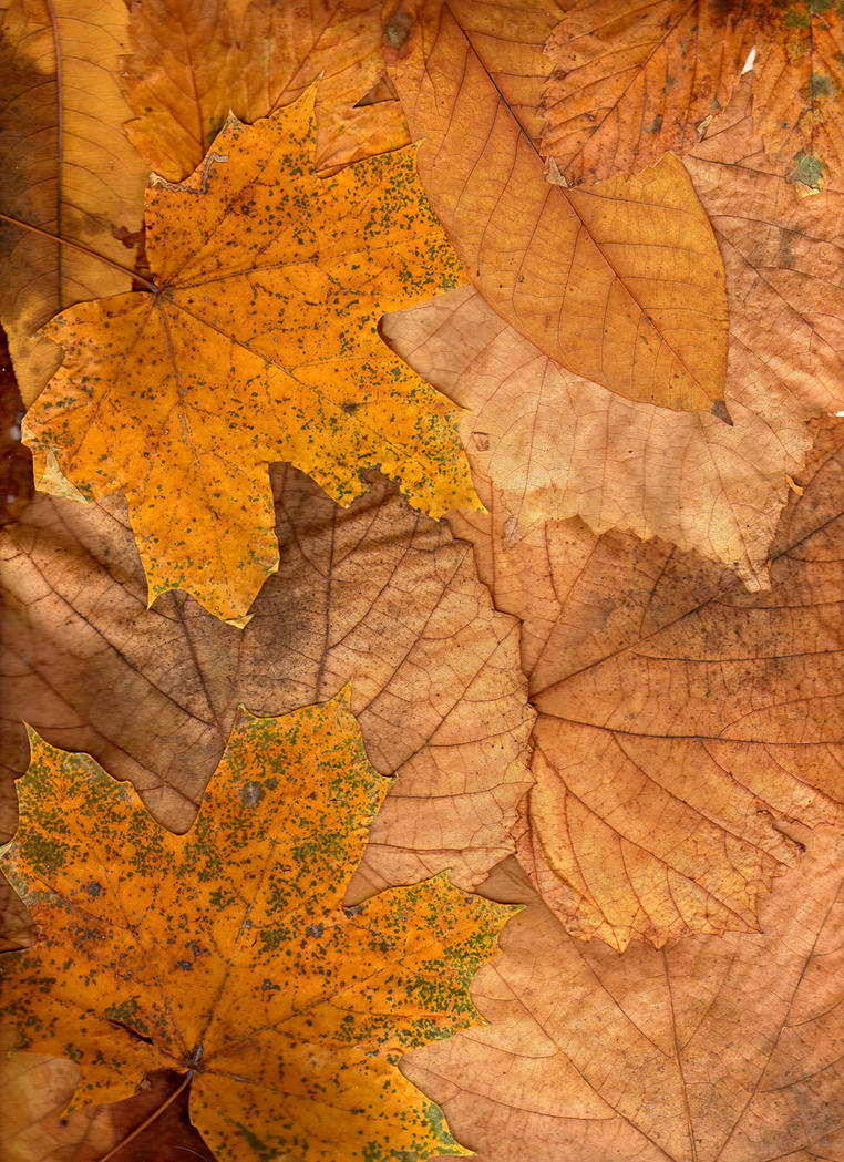 autumn texture2 by KTVL-resources