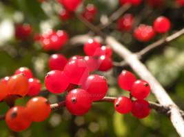 red berries too