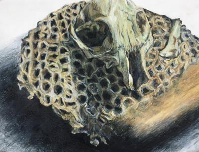 Skull by mothlux