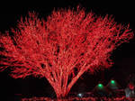HUGE TREE WITH RED CHRISTMAS LIGHTS