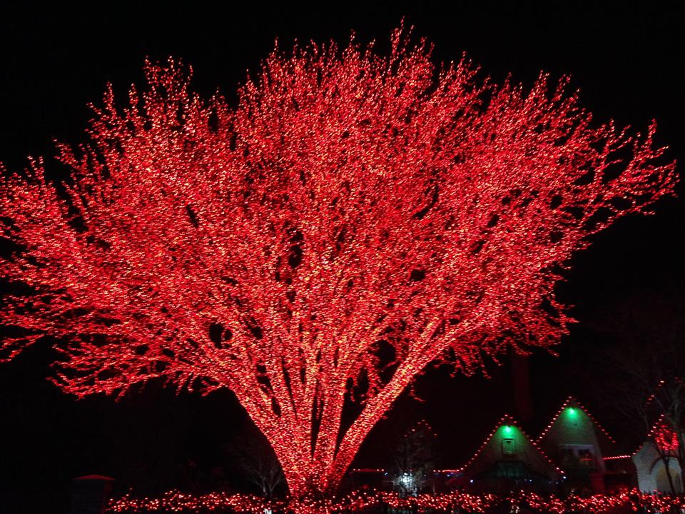 huge tree with red christmas lights by kerensaw - Red Christmas Tree Lights