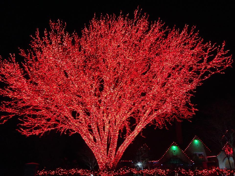 HUGE TREE WITH RED CHRISTMAS LIGHTS