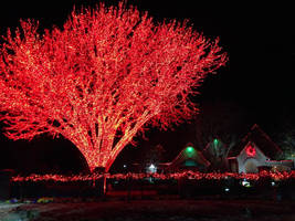RED TREE WITH HOUSE IN BACKGROUND