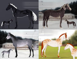 AUCTION Horse adopt [OPEN]