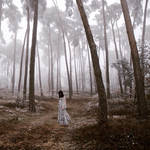 Mystery florest