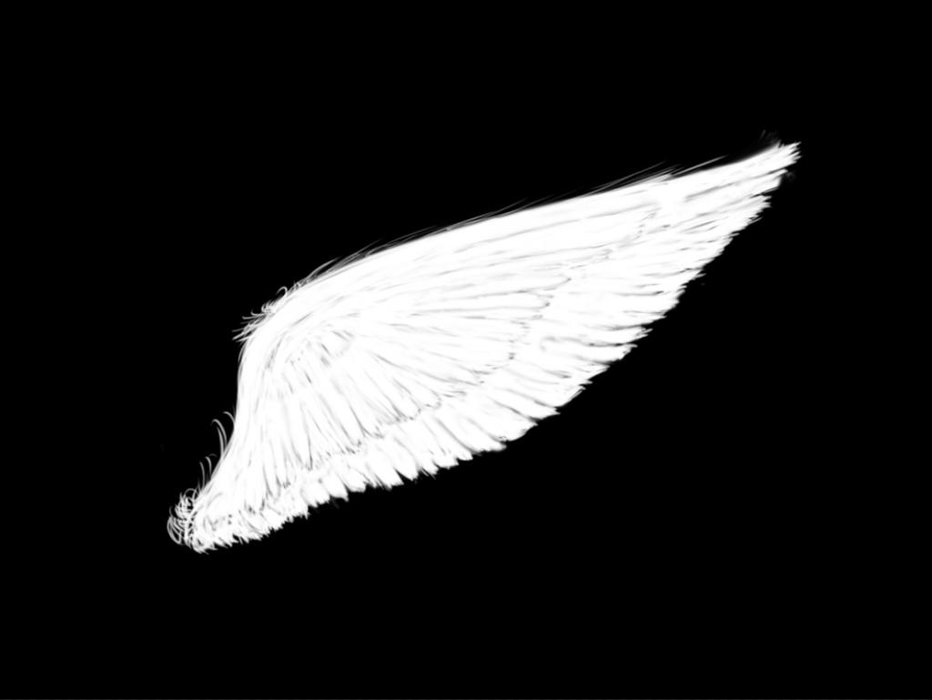 angel wings black background - photo #32
