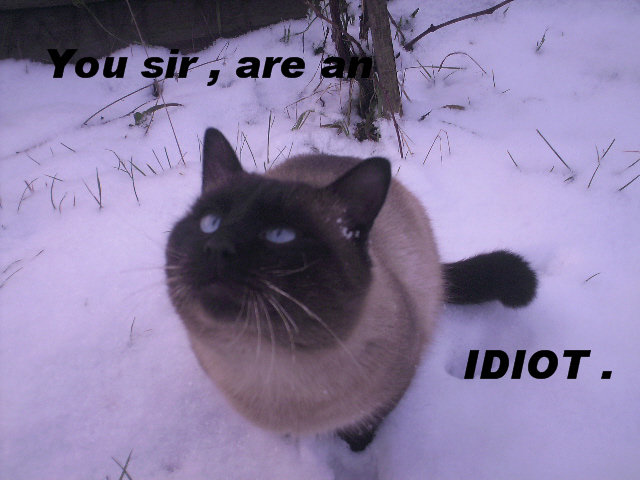 my rude cat by sflorina on deviantart
