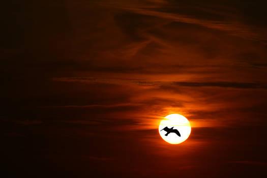 Bird in silhuette
