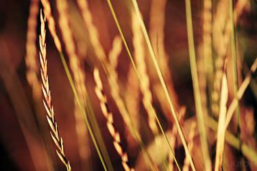 Rye by RobinHedberg