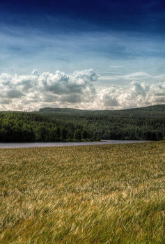 HDR Field