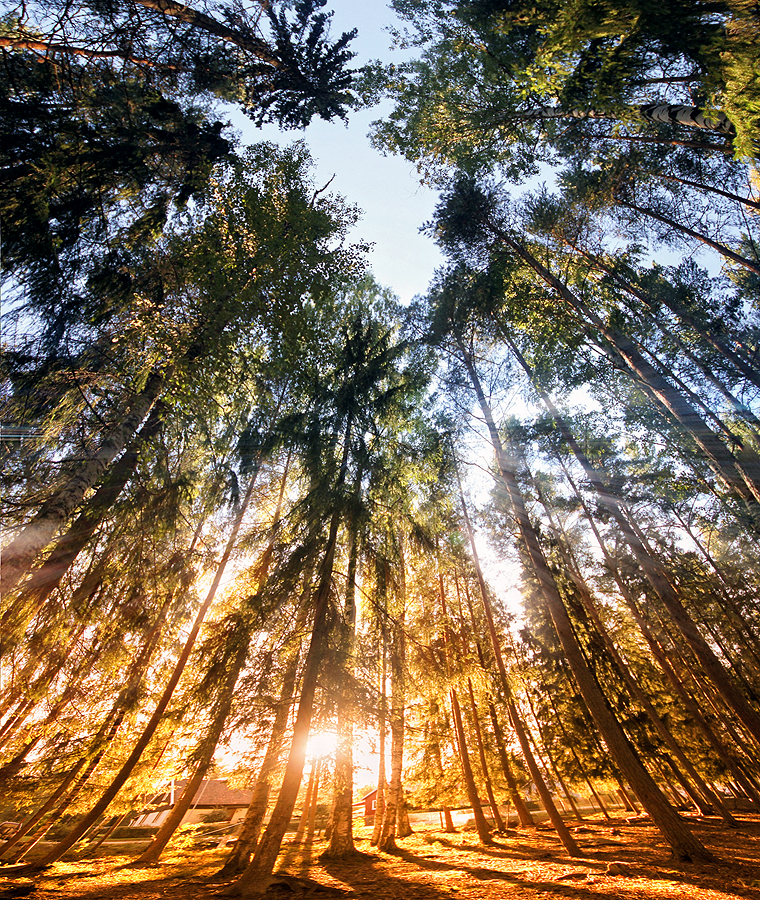 Forest by RobinHedberg