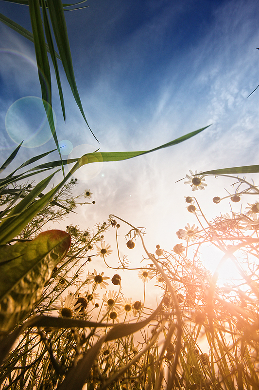Nature from below II by RobinHedberg