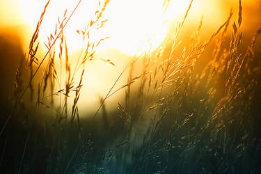 Summer sun by RobinHedberg