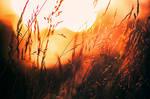 Summer sun II