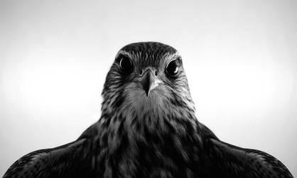 Eye Contact BW by RobinHedberg
