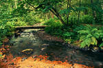 Flowing brook by RobinHedberg