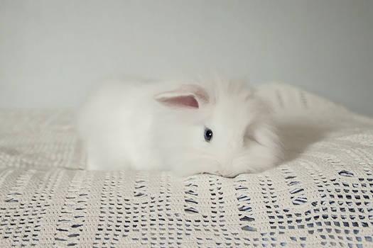 Lumi the bunny