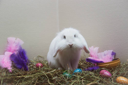 Happy easter from Lumi :)