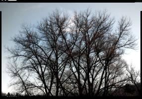 Trees by deinhard