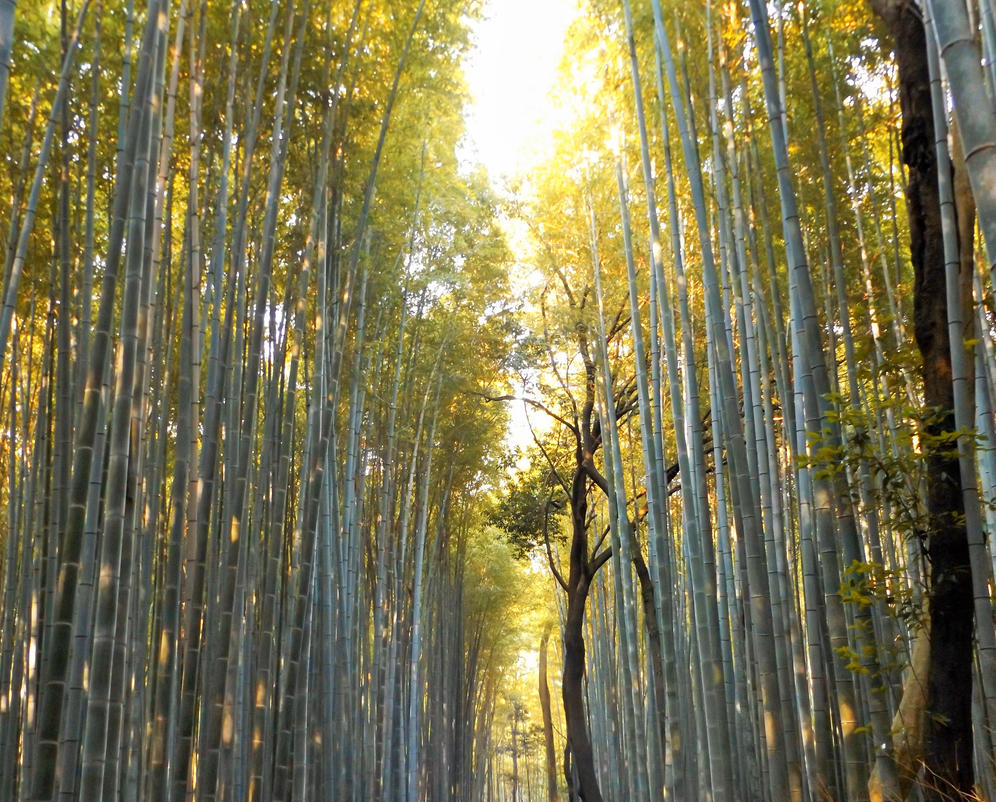 Bamboo forest by mytia07
