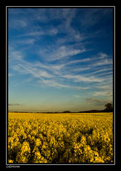 Golden glow 1 by cadman342001
