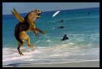 Hawkdog