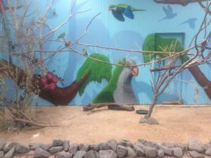 Parrots 1