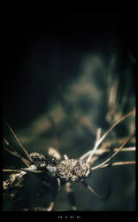 Hive by alyn