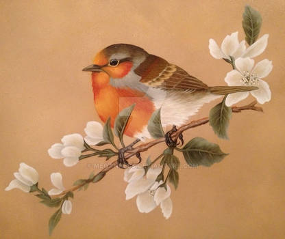 English Robin in Oil