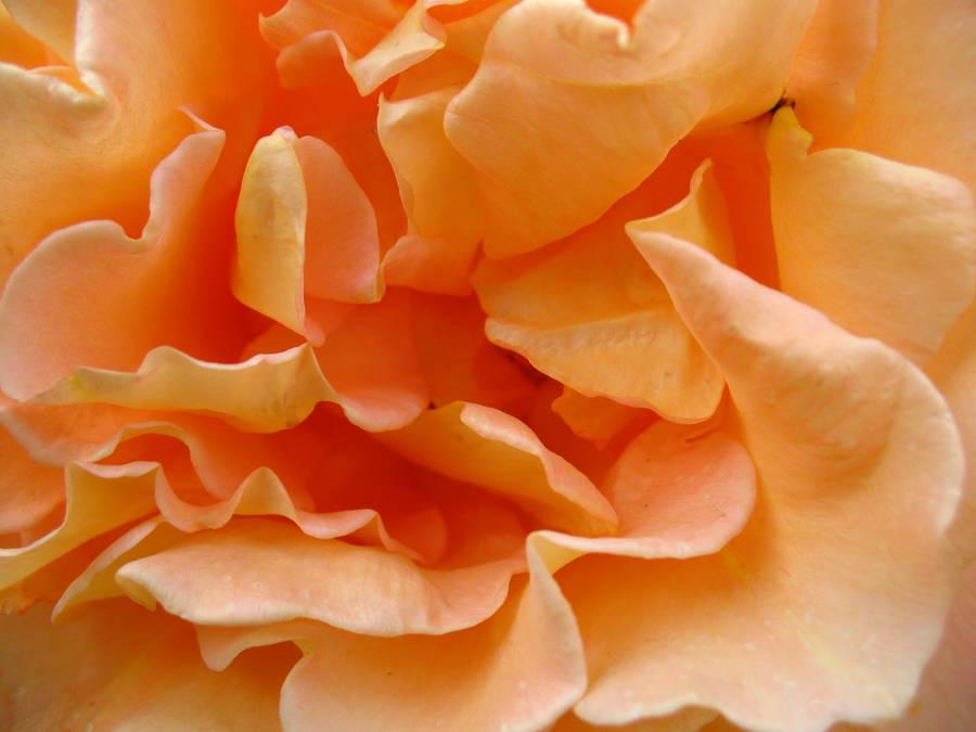 texture 53 by Margotka