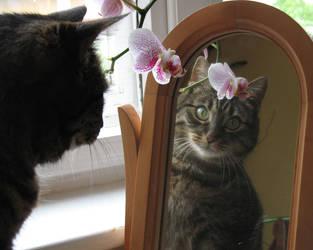 My cat 16 by Margotka