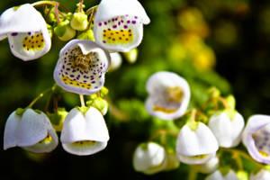 Flower 6 by Liam515