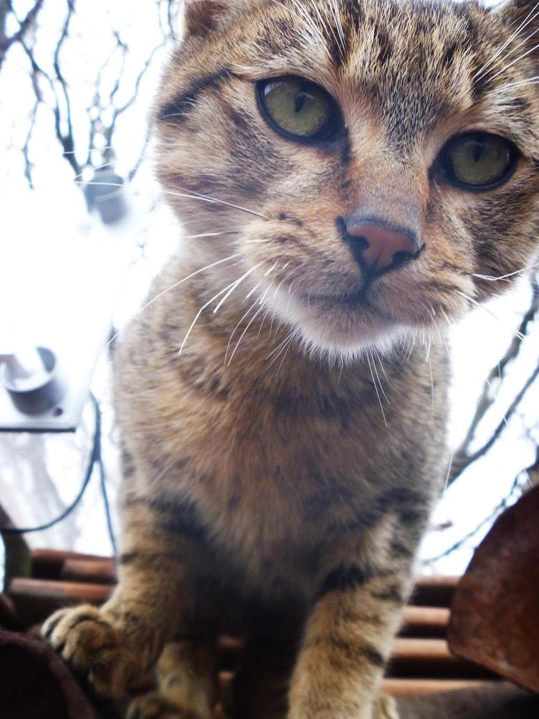My cat by Kiccyke